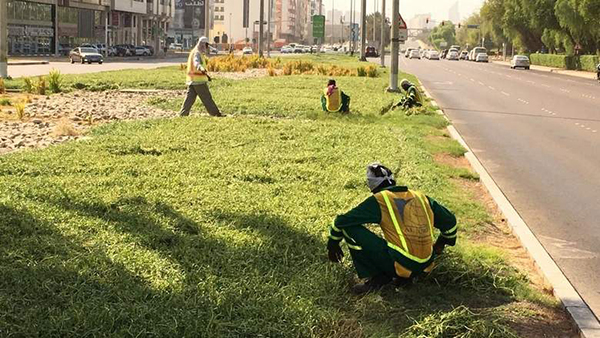 Ongoing Green Initiative to Cover Entire Abu Dhabi